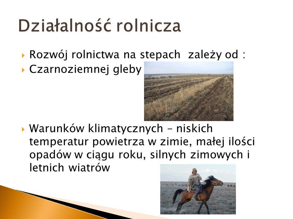 Rozwój rolnictwa na stepach zależy od : Czarnoziemnej gleby Warunków klimatycznych – niskich temperatur powietrza w zimie, małej ilości opadów w ciągu