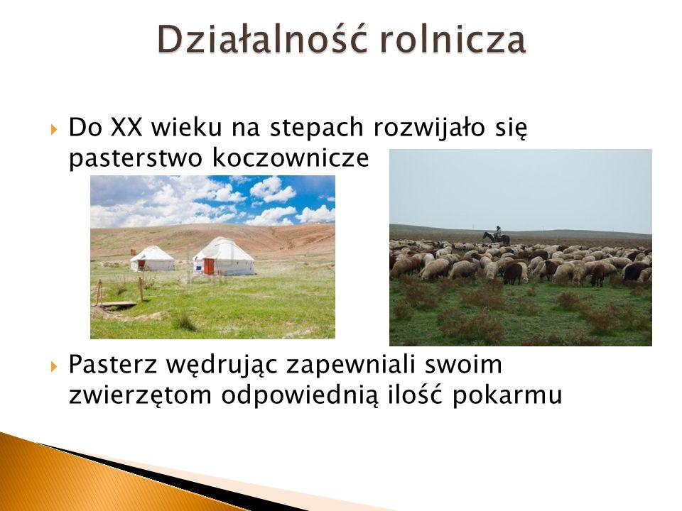 Do XX wieku na stepach rozwijało się pasterstwo koczownicze Pasterz wędrując zapewniali swoim zwierzętom odpowiednią ilość pokarmu
