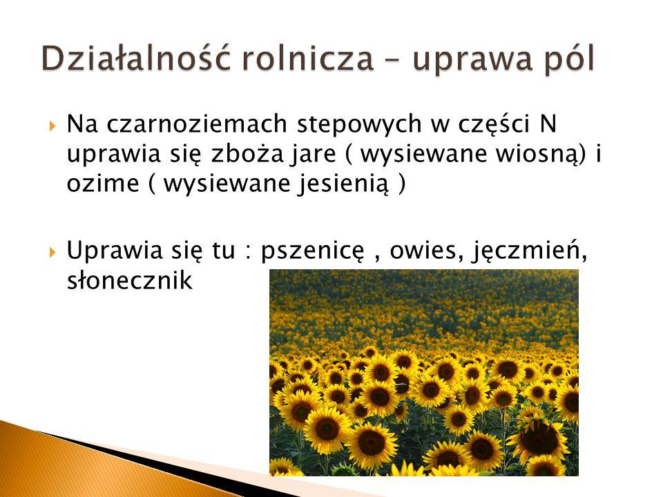 Na czarnoziemach stepowych w części N uprawia się zboża jare ( wysiewane wiosną) i ozime ( wysiewane jesienią ) Uprawia się tu : pszenicę, owies, jęcz