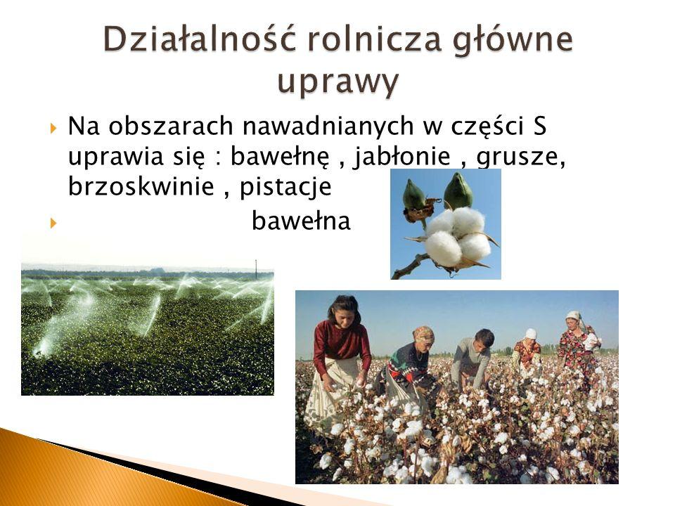Na obszarach nawadnianych w części S uprawia się : bawełnę, jabłonie, grusze, brzoskwinie, pistacje bawełna