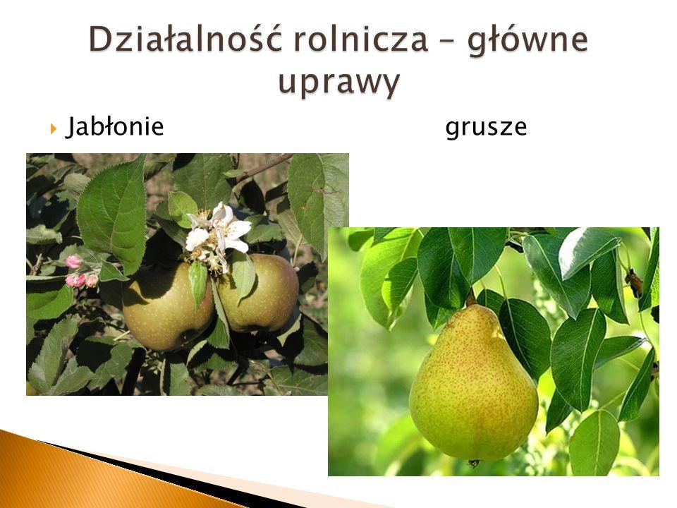 Jabłonie grusze