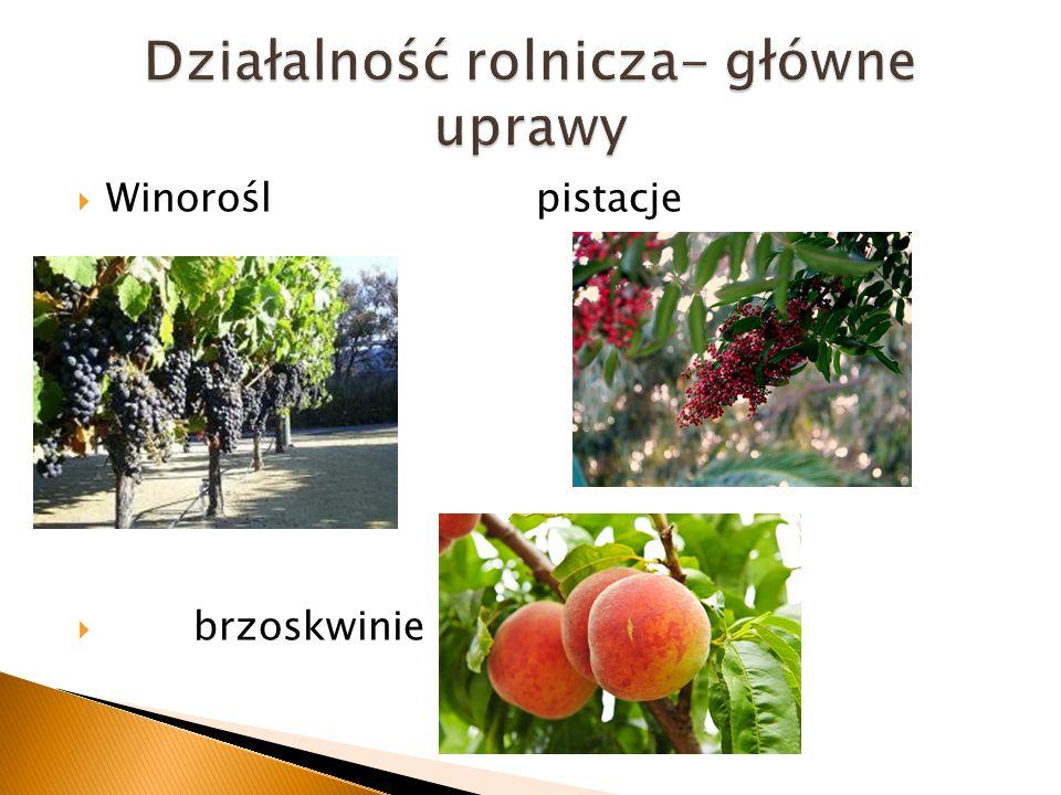 Winorośl pistacje brzoskwinie