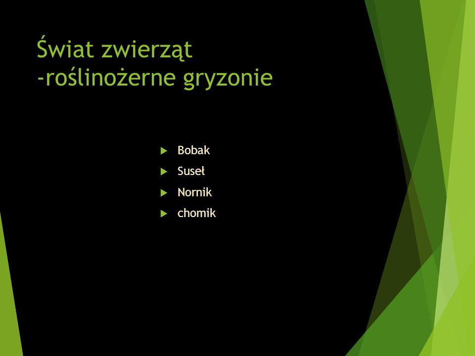 Świat zwierząt -roślinożerne gryzonie Bobak Suseł Nornik chomik