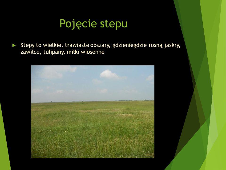 Pojęcie stepu Stepy to wielkie, trawiaste obszary, gdzieniegdzie rosną jaskry, zawilce, tulipany, miłki wiosenne