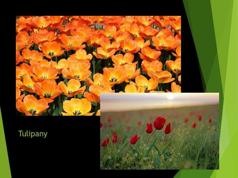 Step w różnych porach roku Roślinność stepowa ulega zmianom ze względu na przebieg temperatury powietrza oraz ilość wilgoci W okresie wiosny step intensywnie się rozwija ze względu na dostateczną ilość wilgoci