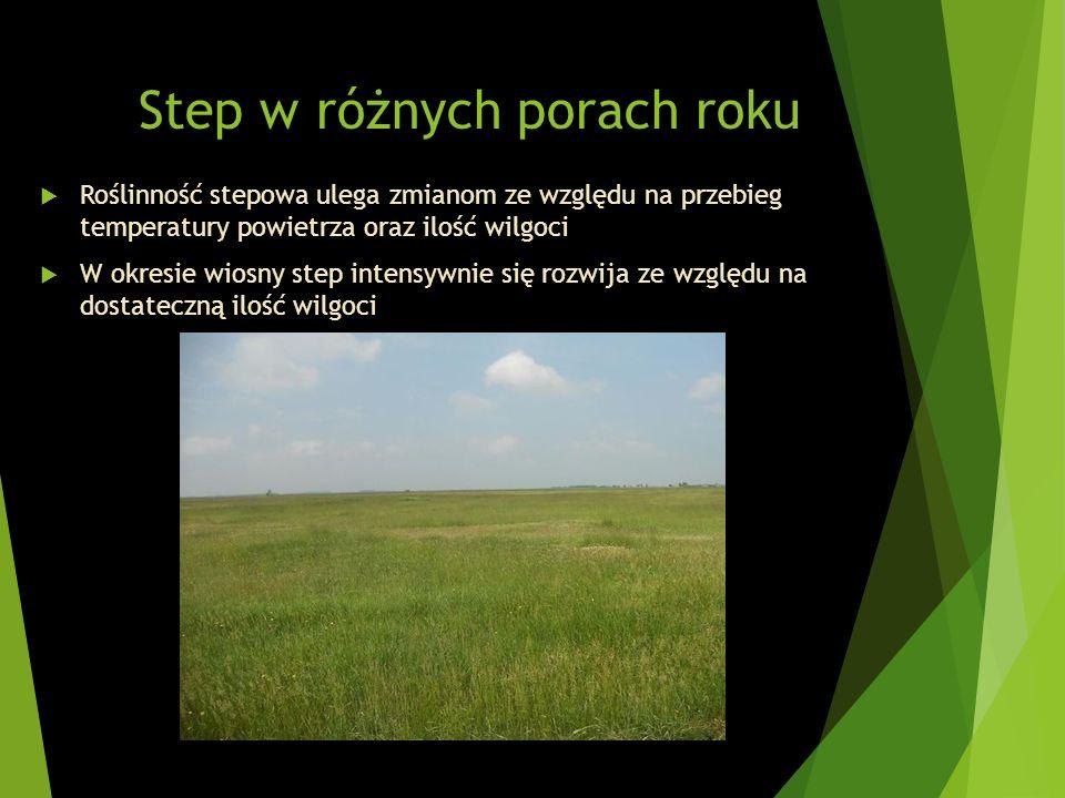 Step w różnych porach roku Roślinność stepowa ulega zmianom ze względu na przebieg temperatury powietrza oraz ilość wilgoci W okresie wiosny step inte