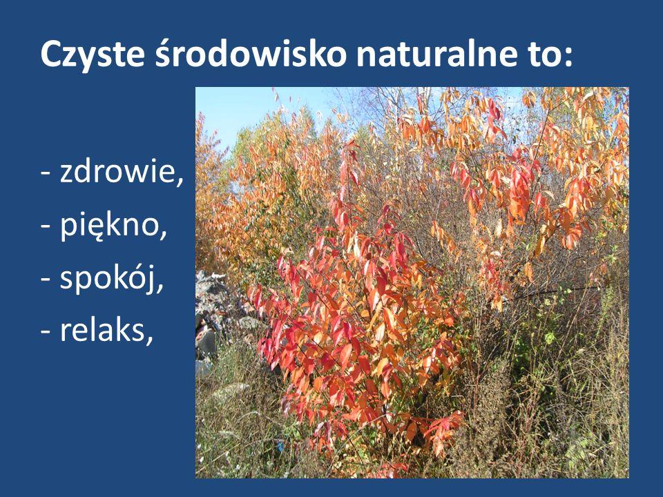 Czyste środowisko naturalne to: - zdrowie, - piękno, - spokój, - relaks,