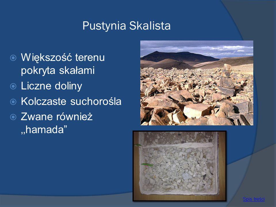 Pustynia Skalista Większość terenu pokryta skałami Liczne doliny Kolczaste suchorośla Zwane również hamada Spis treści
