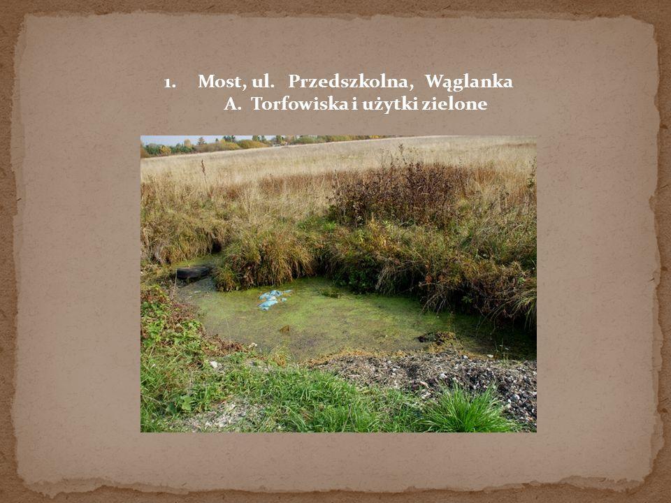 1.Most, ul. Przedszkolna, Wąglanka A. Torfowiska i użytki zielone