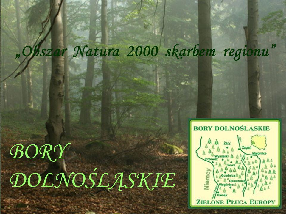 Obszar Natura 2000 skarbem regionu BORY DOLNOŚLĄSKIE Obszar Natura 2000 skarbem regionu BORY DOLNOŚLĄSKIE