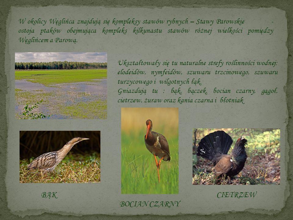 W okolicy Węglińca znajdują się kompleksy stawów rybnych – Stawy Parowskie - ostoja ptaków obejmująca kompleks kilkunastu stawów różnej wielkości pomi