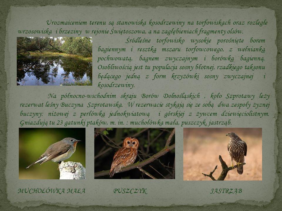 Urozmaiceniem terenu są stanowiska kosodrzewiny na torfowiskach oraz rozległe wrzosowiska i brzeziny w rejonie Świętoszowa, a na zagłębieniach fragmen