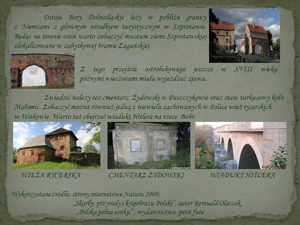 Ostoja Bory Dolnośląskie leży w pobliżu granicy z Niemcami z głównym ośrodkiem turystycznym w Szprotawie. Będąc na terenie ostoi warto zobaczyć muzeum