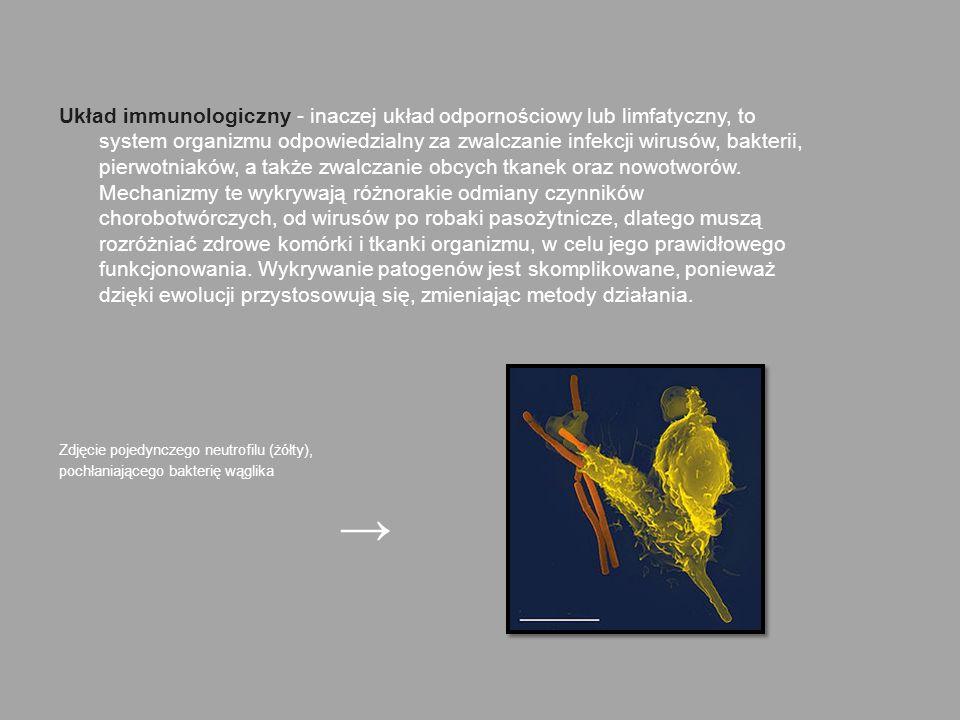 Układ immunologiczny - inaczej układ odpornościowy lub limfatyczny, to system organizmu odpowiedzialny za zwalczanie infekcji wirusów, bakterii, pierw