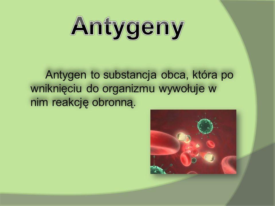 Antygen to substancja obca, która po wniknięciu do organizmu wywołuje w nim reakcję obronną.