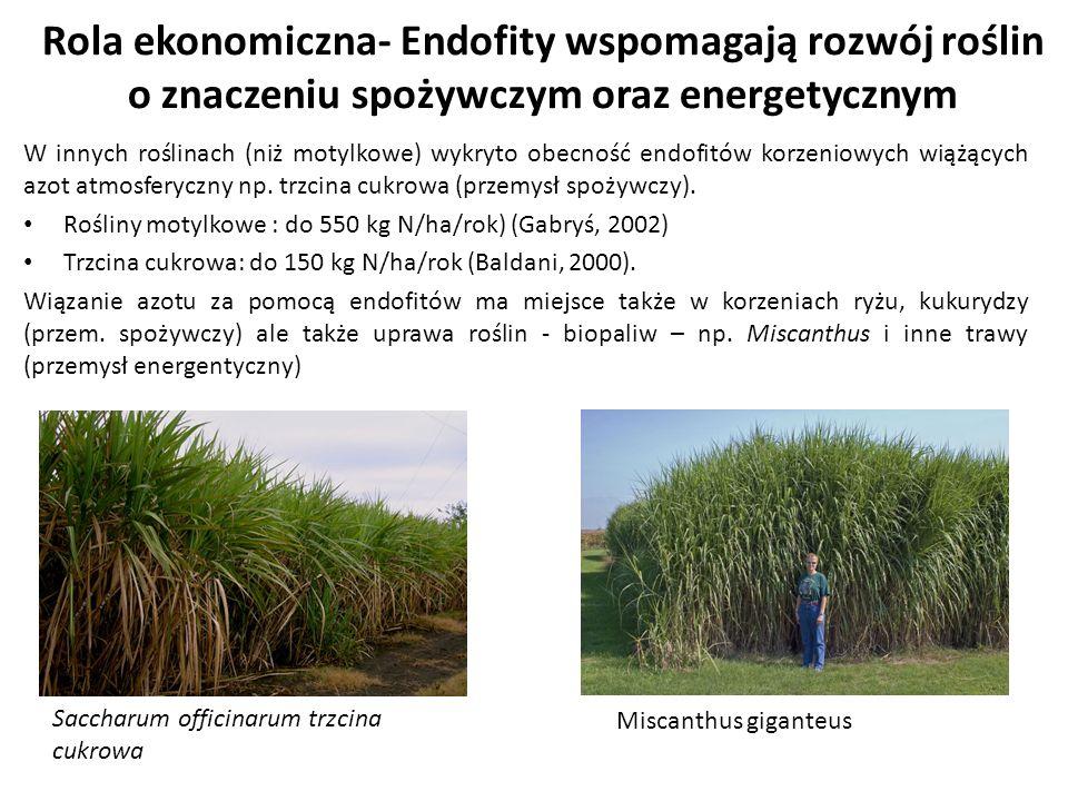 Rola ekonomiczna- Endofity wspomagają rozwój roślin o znaczeniu spożywczym oraz energetycznym W innych roślinach (niż motylkowe) wykryto obecność endo