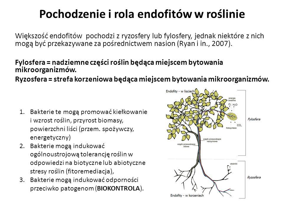 Pochodzenie i rola endofitów w roślinie Większość endofitów pochodzi z ryzosfery lub fylosfery, jednak niektóre z nich mogą być przekazywane za pośred