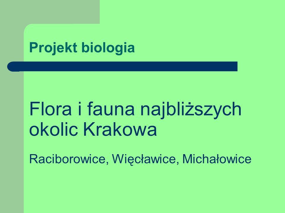Projekt biologia Flora i fauna najbliższych okolic Krakowa Raciborowice, Więcławice, Michałowice