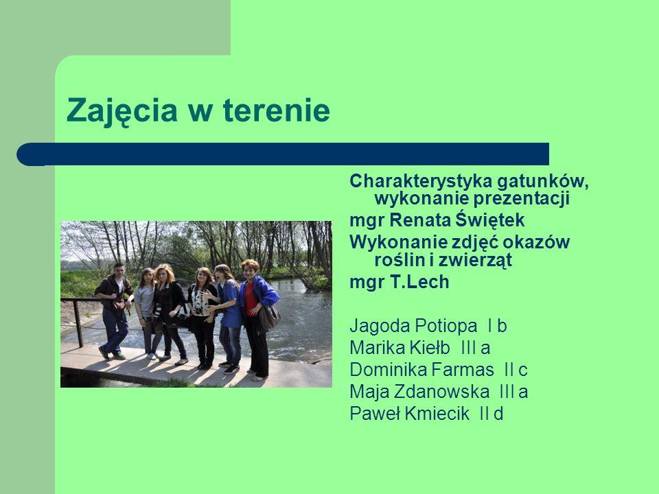 Zajęcia w terenie Charakterystyka gatunków, wykonanie prezentacji mgr Renata Świętek Wykonanie zdjęć okazów roślin i zwierząt mgr T.Lech Jagoda Potiopa I b Marika Kiełb III a Dominika Farmas II c Maja Zdanowska III a Paweł Kmiecik II d