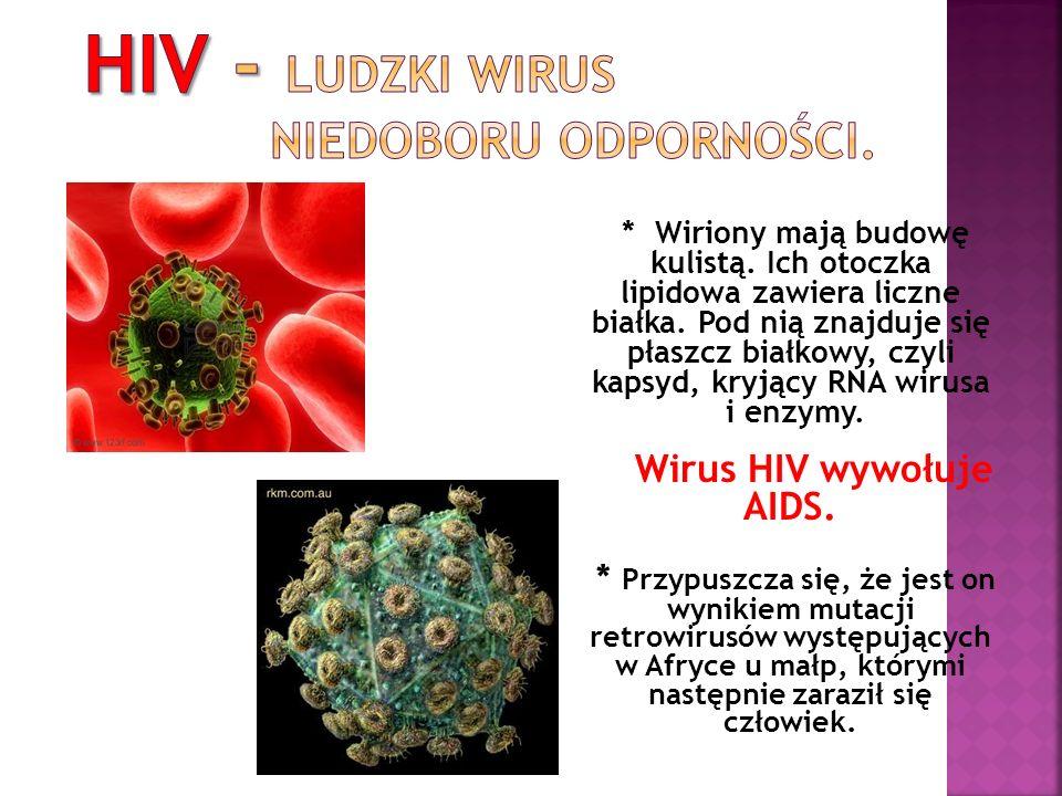 * Wiriony mają budowę kulistą. Ich otoczka lipidowa zawiera liczne białka. Pod nią znajduje się płaszcz białkowy, czyli kapsyd, kryjący RNA wirusa i e