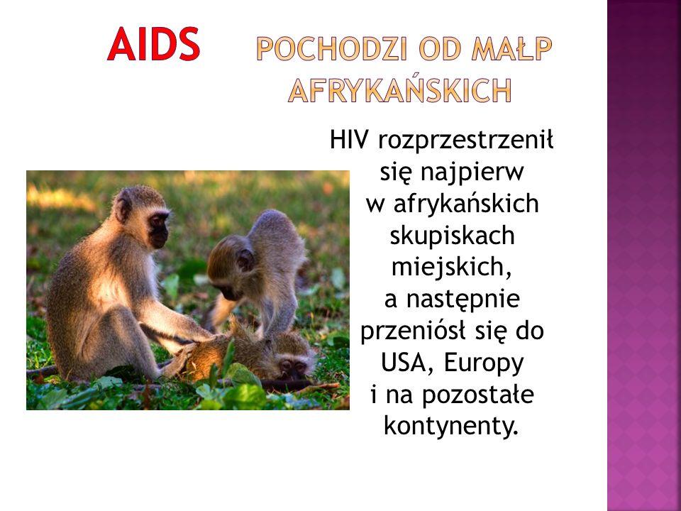HIV rozprzestrzenił się najpierw w afrykańskich skupiskach miejskich, a następnie przeniósł się do USA, Europy i na pozostałe kontynenty.