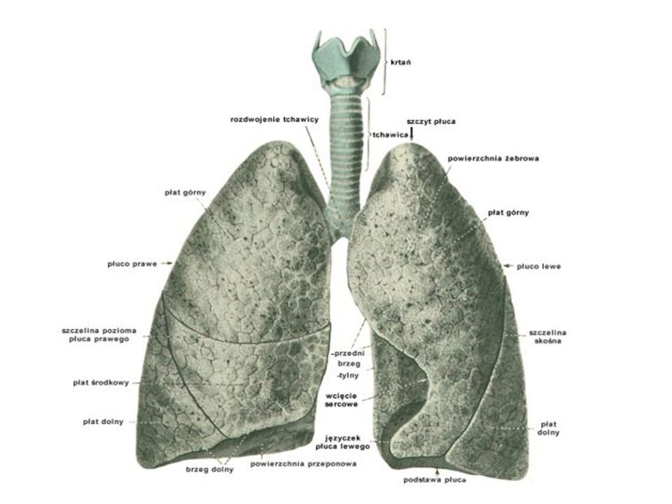 Główna funkcją oddychania jest dostarczenie każdej żywej komórce organizmu tlenu gdzie przy jego udziale dochodzi do spalania, czyli utleniania substancji odżywczych.