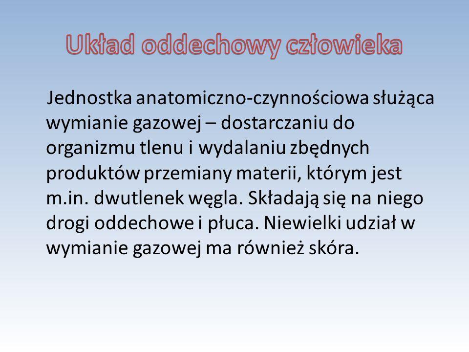 Jednostka anatomiczno-czynnościowa służąca wymianie gazowej – dostarczaniu do organizmu tlenu i wydalaniu zbędnych produktów przemiany materii, którym
