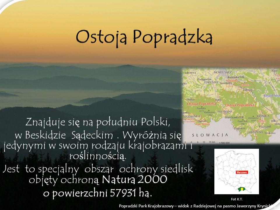 Na terenie Ostoi Popradzkiej znajduje się 1 park krajobrazowy, 14 rezerwatów i obszar chronionego krajobrazu - każda z tych form spełnia określone zadania.