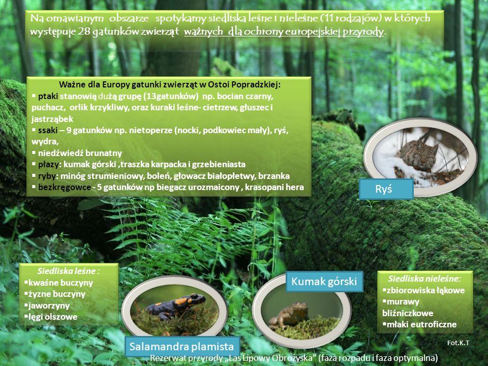 Na omawianym obszarze spotykamy siedliska le ś ne i niele ś ne (11 rodzajów) w których wyst ę puje 28 gatunków zwierz ą t wa ż nych dla ochrony europe