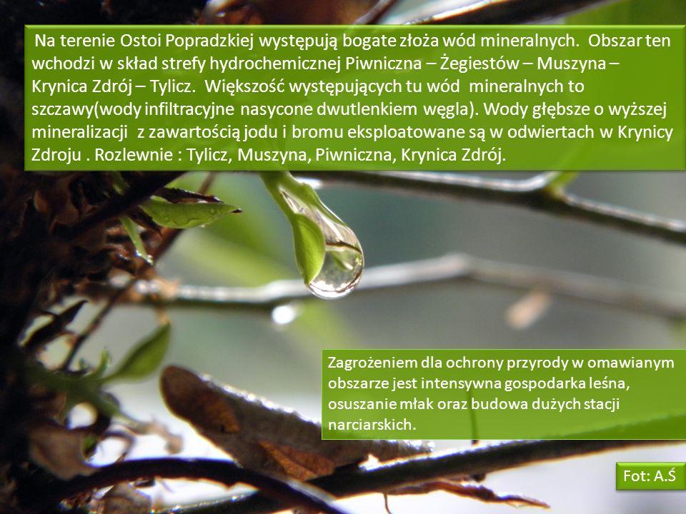 Na terenie Ostoi Popradzkiej występują bogate złoża wód mineralnych. Obszar ten wchodzi w skład strefy hydrochemicznej Piwniczna – Żegiestów – Muszyna