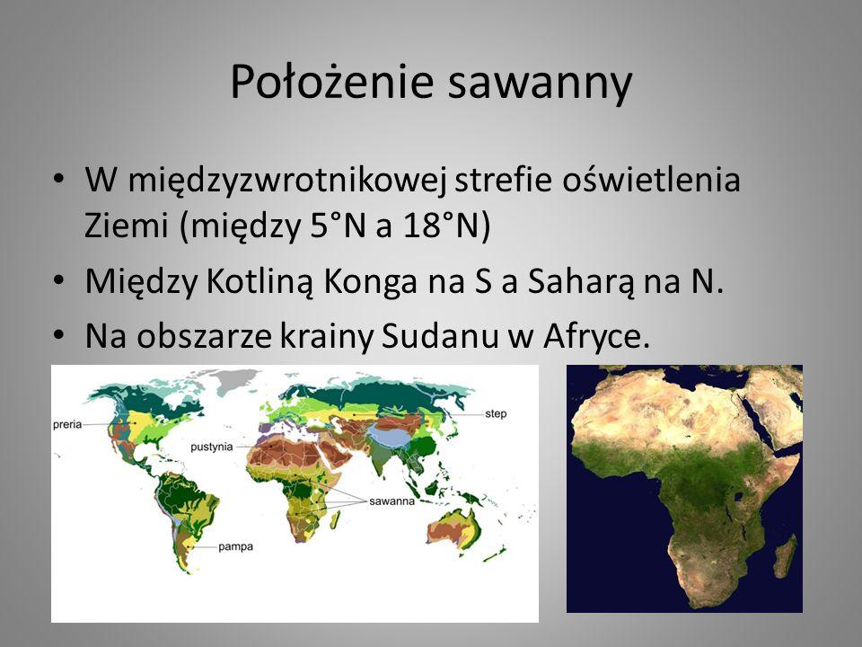 Położenie sawanny W międzyzwrotnikowej strefie oświetlenia Ziemi (między 5°N a 18°N) Między Kotliną Konga na S a Saharą na N. Na obszarze krainy Sudan