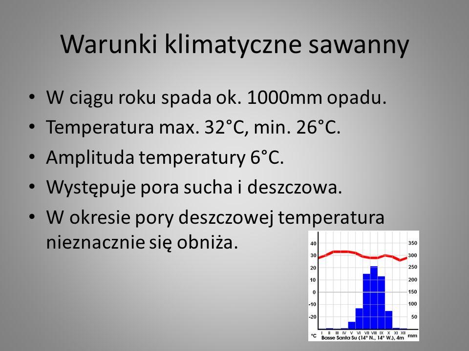 Warunki klimatyczne sawanny W ciągu roku spada ok. 1000mm opadu. Temperatura max. 32°C, min. 26°C. Amplituda temperatury 6°C. Występuje pora sucha i d