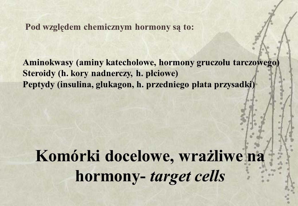 Gruczoły dokrewne i ich hormony Podwzgórze:somatostatyna, gonadoliberyna Przysadka przedni płat: STH, ACTH, tyreotropina, gonadotropina, laktotropina tylny płat: wazopresyna, oksytocyna Tarczyca: tyroksyna, trójodotyronina, kalcytonina Przytarczyce: parathormon Grasica:tymozyna Trzustka: glukagon, insulina Nadnercza rdzeń: adrenalina kora: mineralo-, gliko-, adrenokortykosteroidy Gruczoły płciowe jądra: androgeny jajniki: estrogeny, gestageny