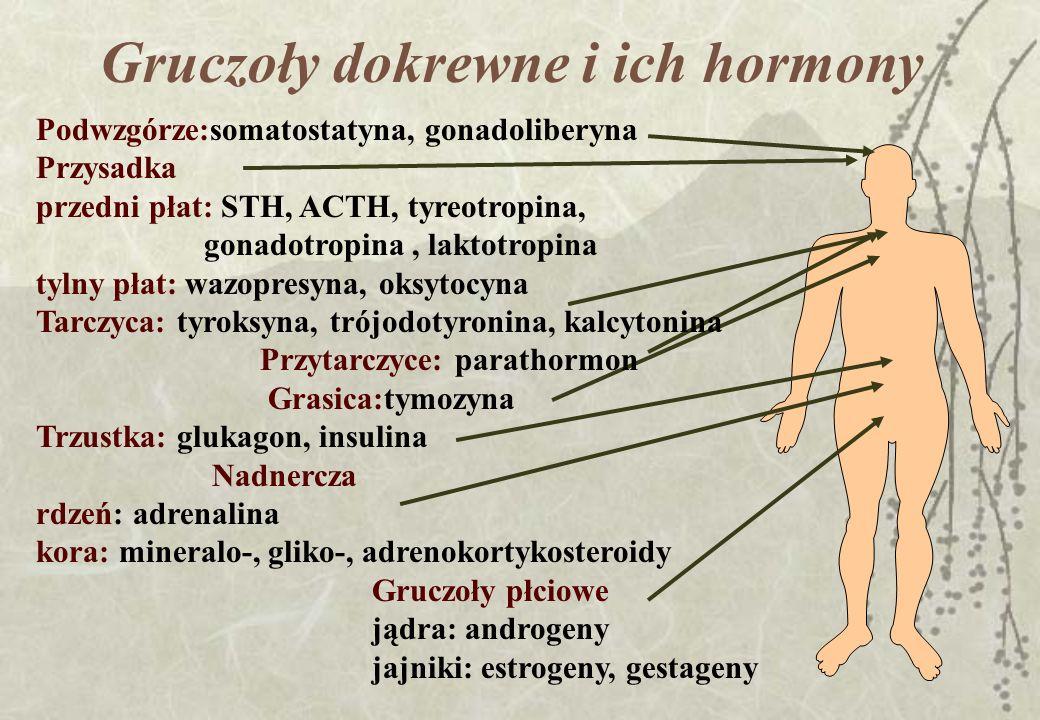 Gruczoły dokrewne i ich hormony Podwzgórze:somatostatyna, gonadoliberyna Przysadka przedni płat: STH, ACTH, tyreotropina, gonadotropina, laktotropina