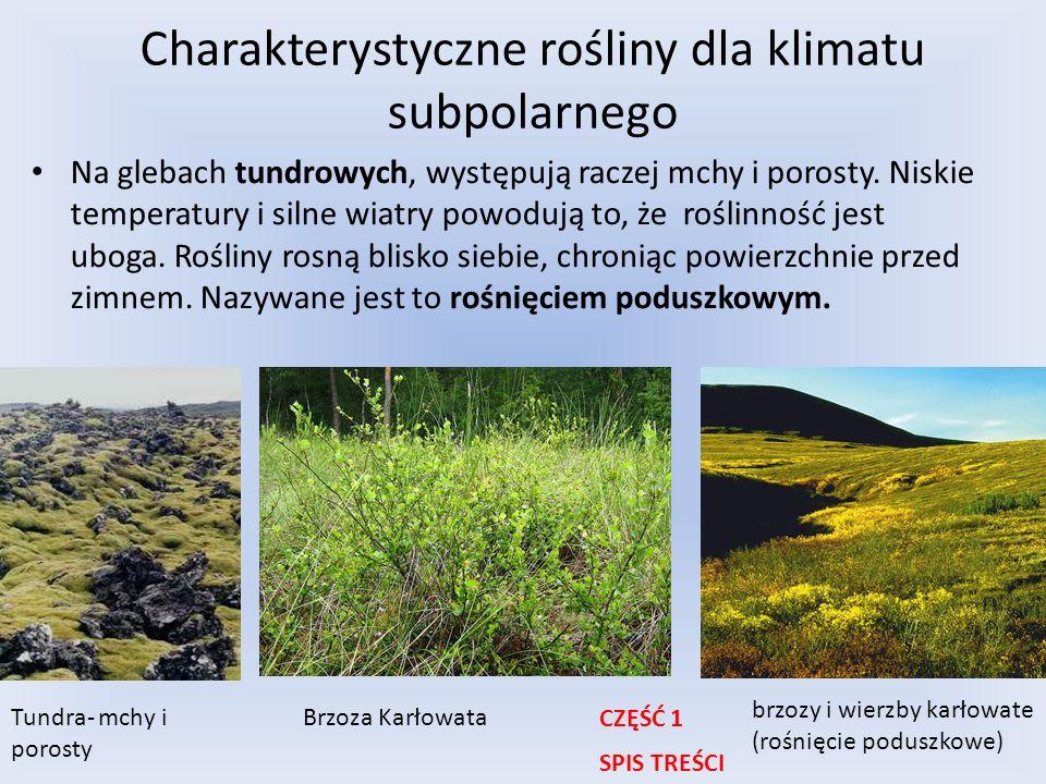 Charakterystyczne rośliny dla klimatu subpolarnego Na glebach tundrowych, występują raczej mchy i porosty. Niskie temperatury i silne wiatry powodują