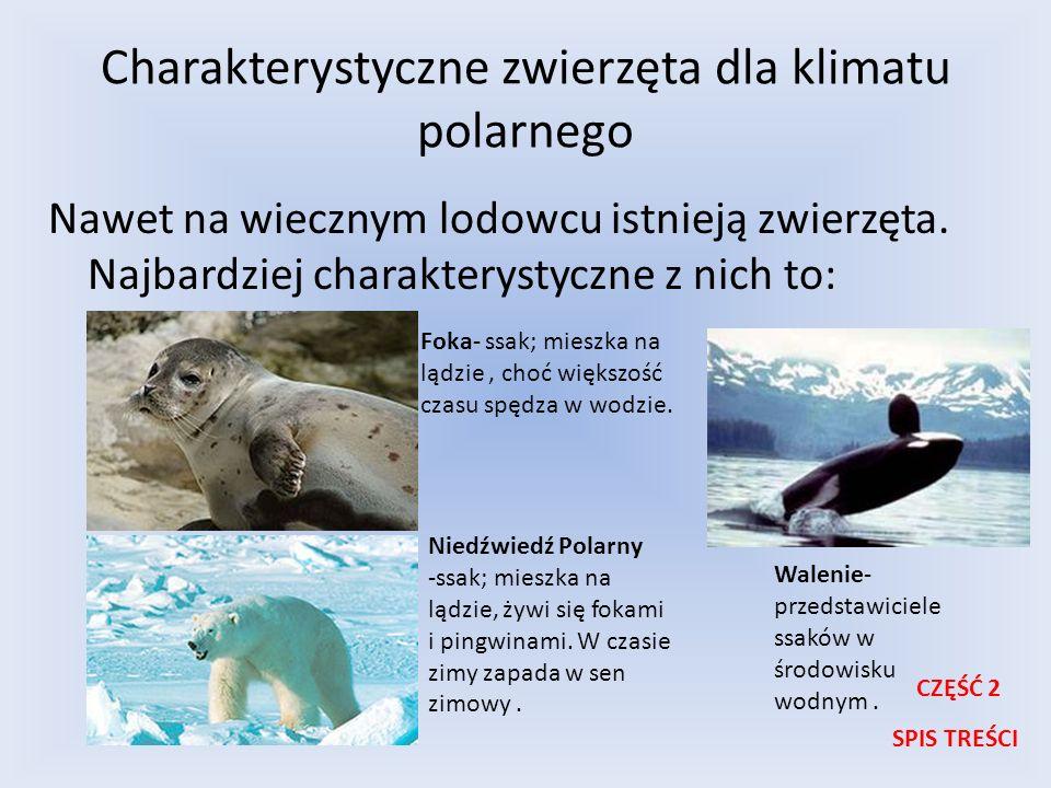 Charakterystyczne zwierzęta dla klimatu polarnego Nawet na wiecznym lodowcu istnieją zwierzęta. Najbardziej charakterystyczne z nich to: Foka- ssak; m