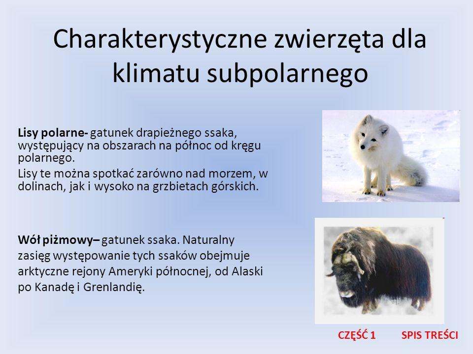 Charakterystyczne zwierzęta dla klimatu subpolarnego Lisy polarne- gatunek drapieżnego ssaka, występujący na obszarach na północ od kręgu polarnego. L