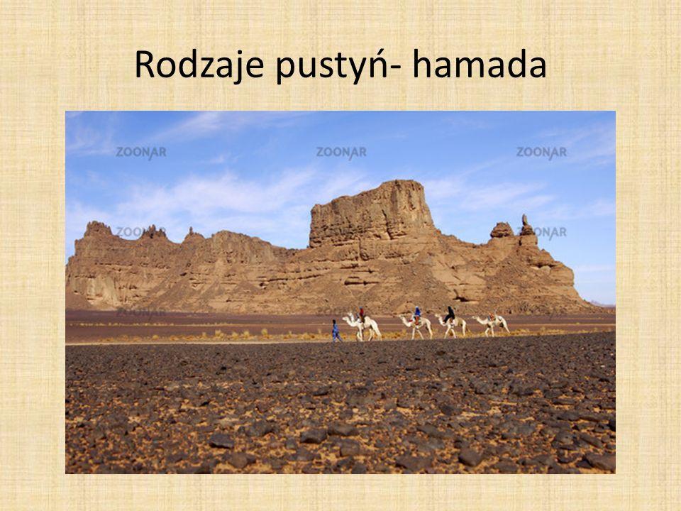 Roślinność Sahary Roślinność Sahary jest przystosowana do suszy.