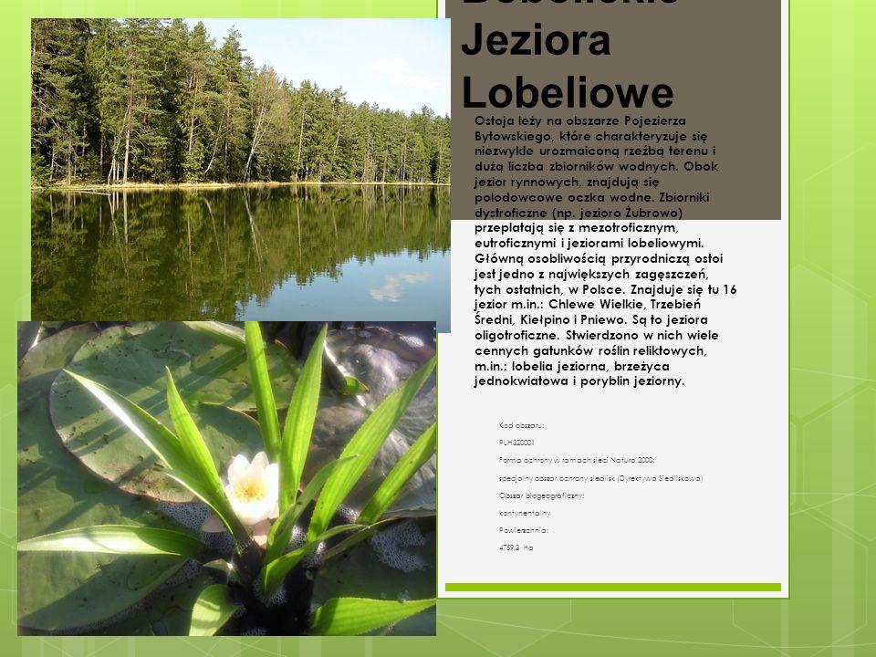Bobolickie Jeziora Lobeliowe Kod obszaru: PLH320001 Forma ochrony w ramach sieci Natura 2000: specjalny obszar ochrony siedlisk (Dyrektywa Siedliskowa