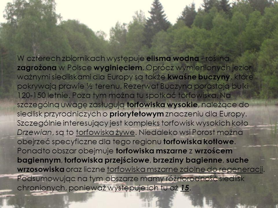 W czterech zbiornikach występuje elisma wodna - roślina zagrożona w Polsce wyginięciem. Oprócz wymienionych jezior ważnymi siedliskami dla Europy są t