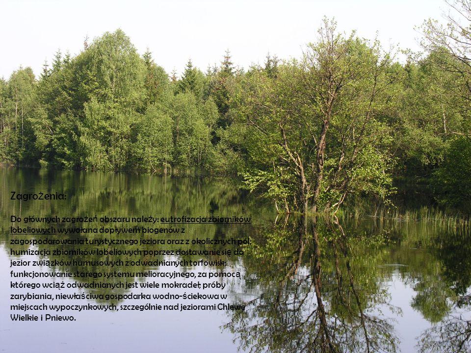 Zagro ż enia: Do głównych zagro ż e ń obszaru nale ż y: eutrofizacja zbiorników lobeliowych wywołana dopływem biogenów z zagospodarowania turystyczneg