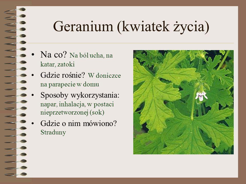 Geranium (kwiatek życia) Na co.Na ból ucha, na katar, zatoki Gdzie rośnie.