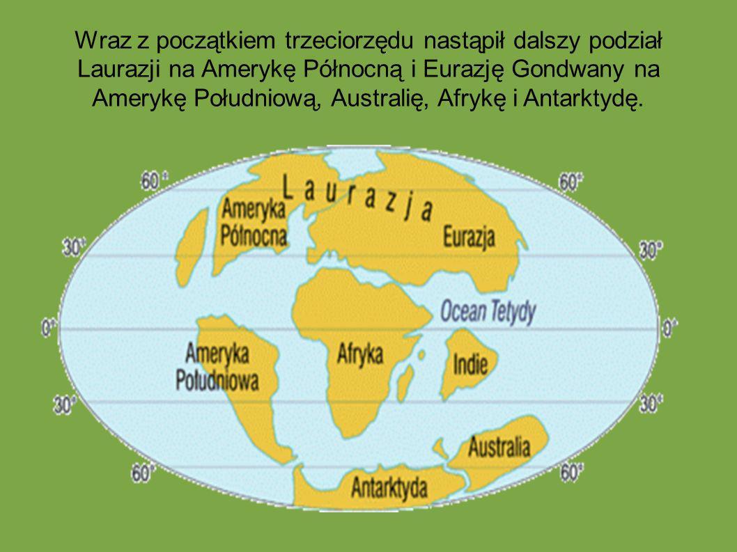 Wraz z początkiem trzeciorzędu nastąpił dalszy podział Laurazji na Amerykę Północną i Eurazję Gondwany na Amerykę Południową, Australię, Afrykę i Anta