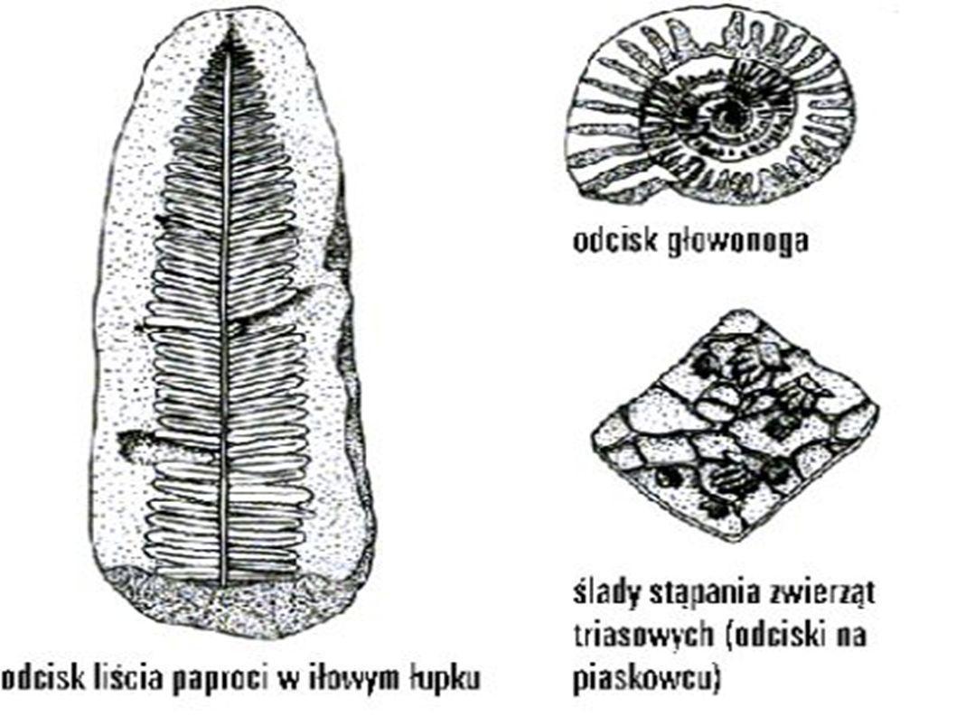 Minerał – pierwiastek lub związek chemiczny, który powstał w sposób naturalny w skorupie ziemskiej; około 200 z 4000 należy do skałotwórczych.