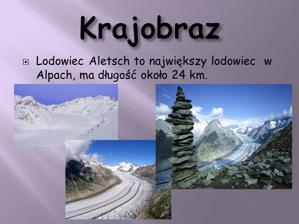 Lodowiec Aletsch to największy lodowiec w Alpach, ma długość około 24 km.