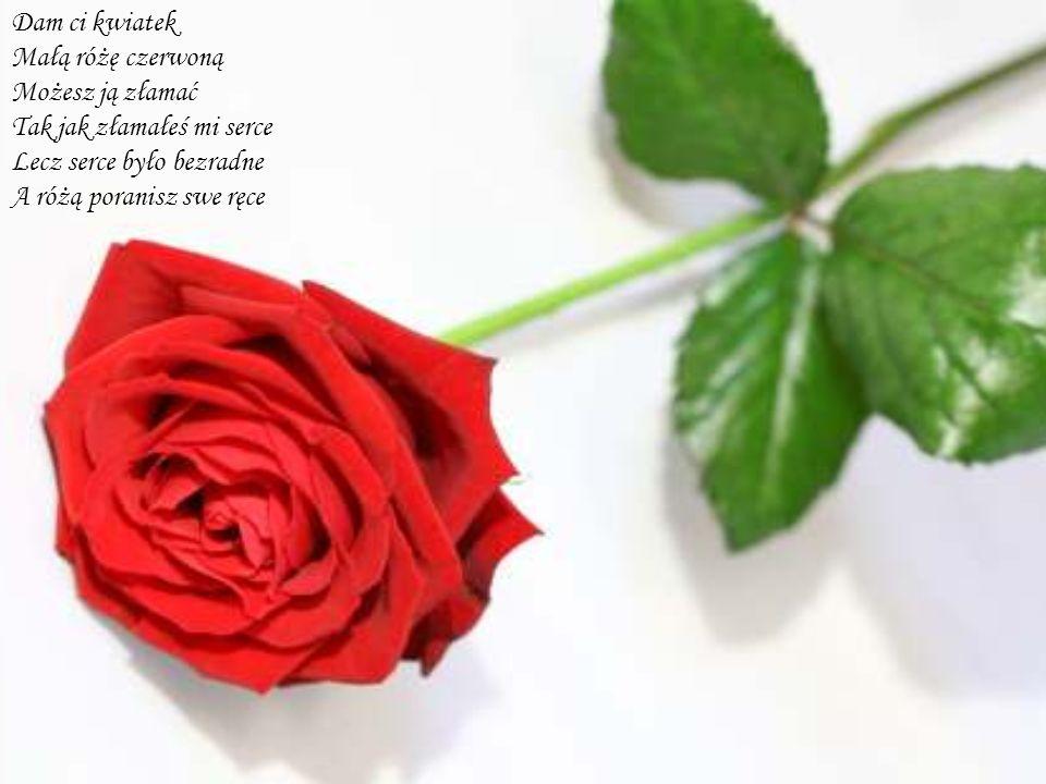 Dam ci kwiatek Małą różę czerwoną Możesz ją złamać Tak jak złamałeś mi serce Lecz serce było bezradne A różą poranisz swe ręce