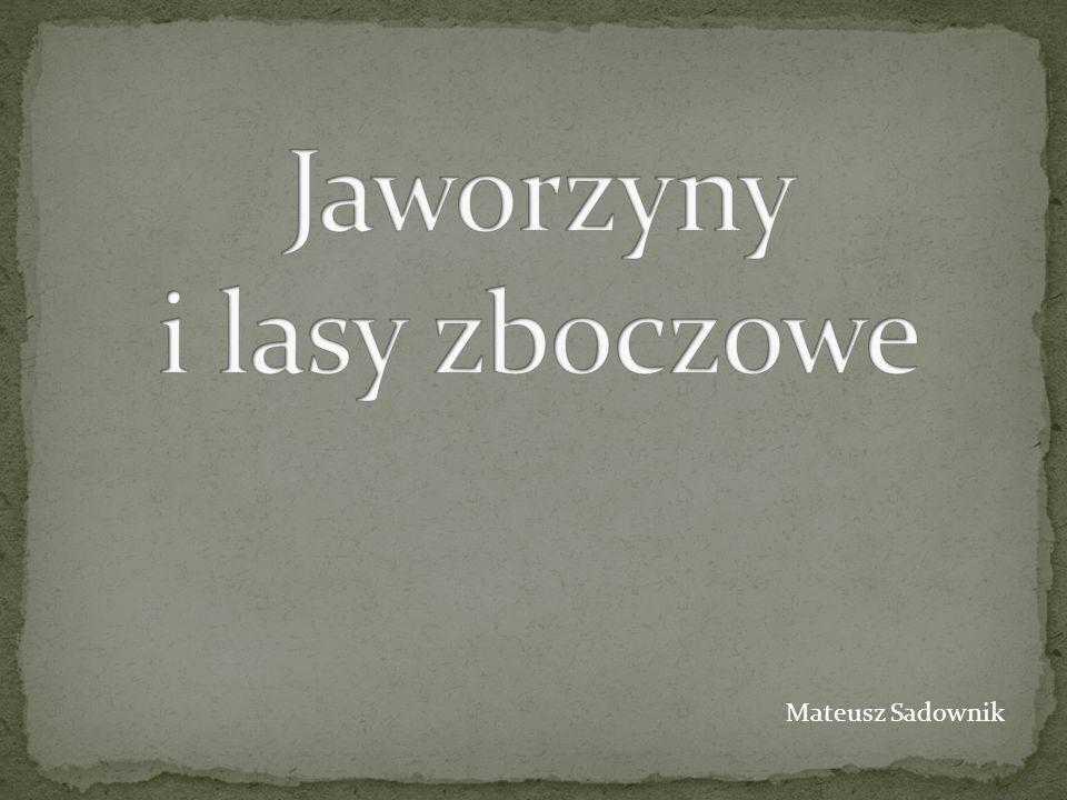 Mateusz Sadownik