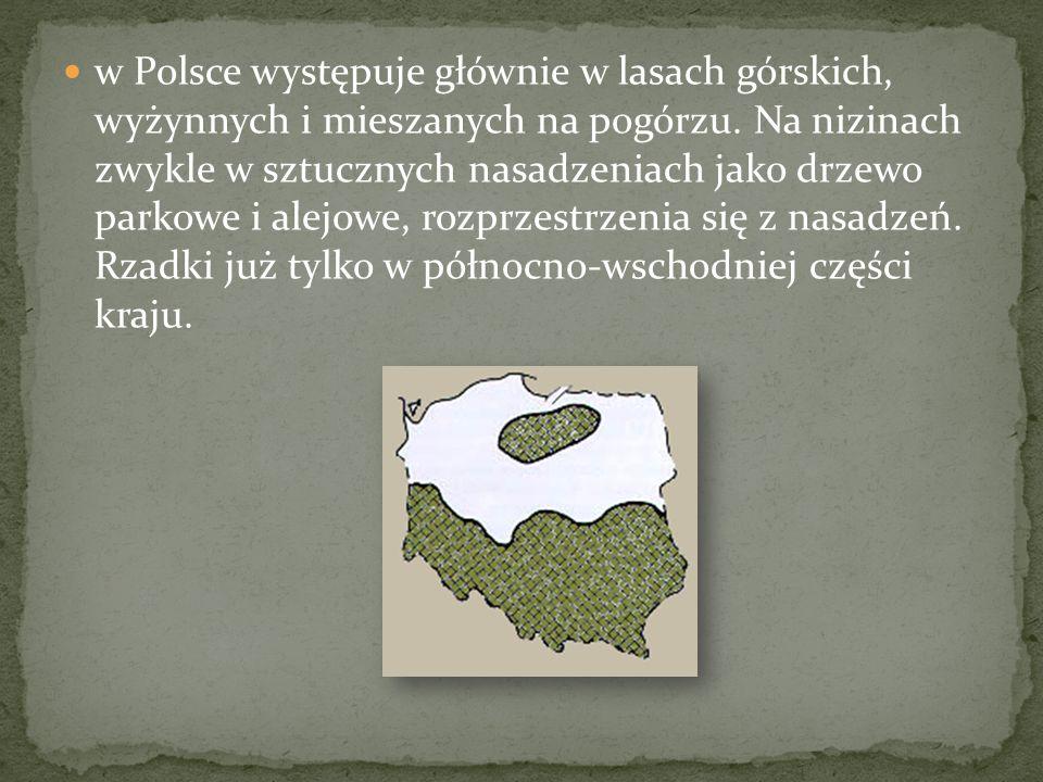 w Polsce występuje głównie w lasach górskich, wyżynnych i mieszanych na pogórzu. Na nizinach zwykle w sztucznych nasadzeniach jako drzewo parkowe i al