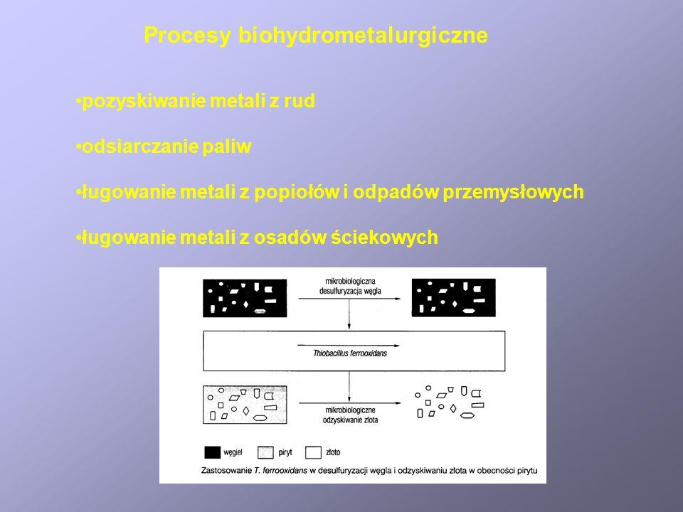 Procesy biohydrometalurgiczne pozyskiwanie metali z rud odsiarczanie paliw ługowanie metali z popiołów i odpadów przemysłowych ługowanie metali z osad