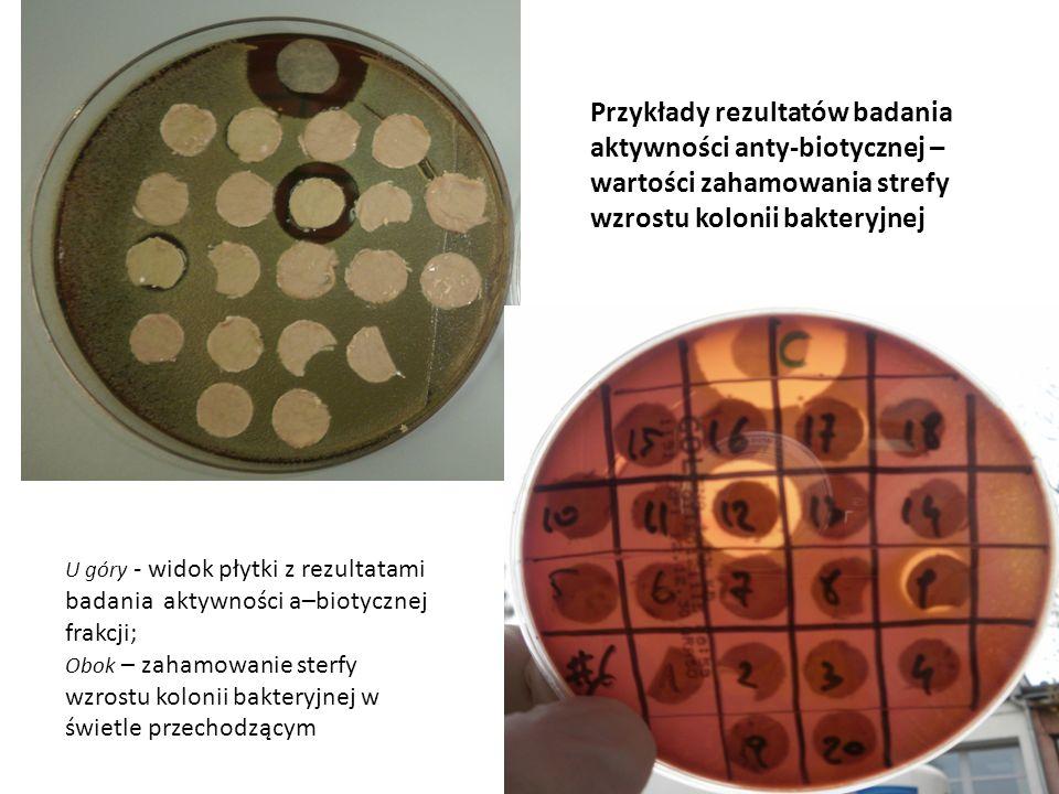 U góry - widok płytki z rezultatami badania aktywności a–biotycznej frakcji; Obok – zahamowanie sterfy wzrostu kolonii bakteryjnej w świetle przechodz